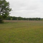 125.78 Acres Pasture and Hunting Land