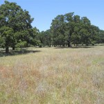 365 Acres Pasture and Hunting Land