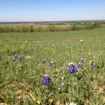 385 Acres Cultivated and Pasture Land