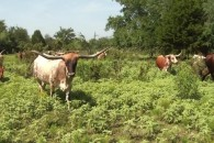 36 Acres with Ranch House at Reagan, TX 76680, USA for 299500