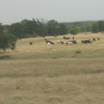 632.97 Acres Horse, Cattle & Hunting Land with Ranch Houses