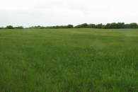 55.3 Acres Horse, Cattle & Hunting Land at Itasca, TX 76055, USA for 284100