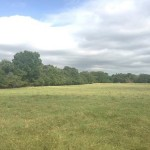 125 Acres Cattle, Horse & Hunting Land With Farmhouse