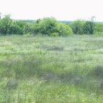 125.0 Acres MOL Hunting, Pasture & Home Sites
