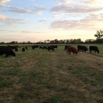 453 Acres Pasture, Crop and Recreational Property on the Brazos River