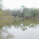 137 Acres MOL Home Site, Recreational and Ranch Land