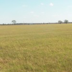 87 Acres Home Site, Ranch Land or Investment Property