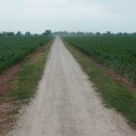 881 Acres MOL  with Brazos River Frontage