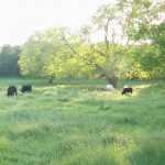 13.84 Acres MOL Home site and Pasture Land