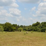 137.23 Acres MOL Livestock & Recreational Land