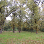 34 Acres MOL Custom Home, Pasture, and Woods