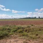 37 Acres MOL Cropland