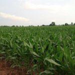 283 Acres MOL Cropland