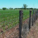 191 Acres Cropland