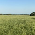 195.65 Acres Cattle, Farming & Recreational Land